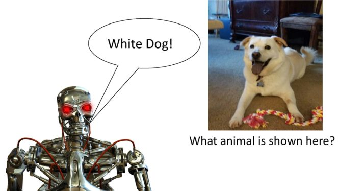 A robot describing an image of a dog and a toy in answer to a question.
